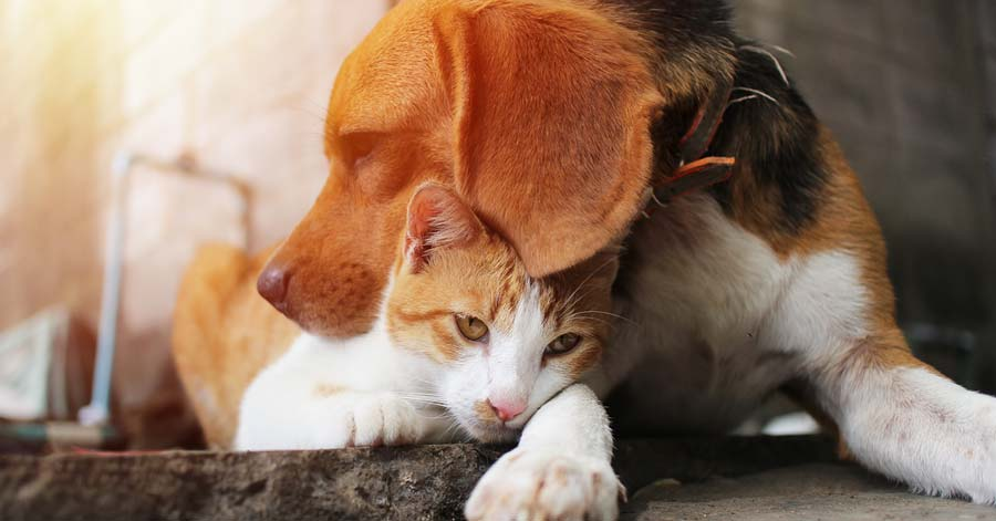 The Facts about Cancer in Dogs and Cats
