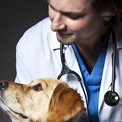 Over 30 Pet Health Experts
